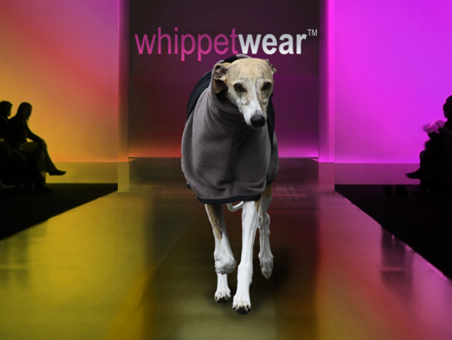 Saddle Coat for Whippets