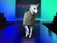 Kiss Whippet Coat