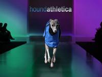 italian greyhound waterproof coat