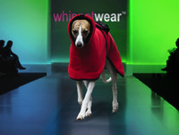 Bellissimo Warm Whippet Coat