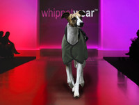 Speed Whippet Coat