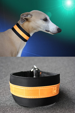 beseen citrus reflective collar 1