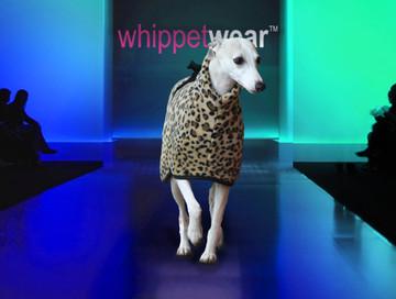 Kiss Whippet Coat