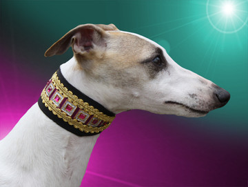 Adored Perfect Princess Whippet Collar