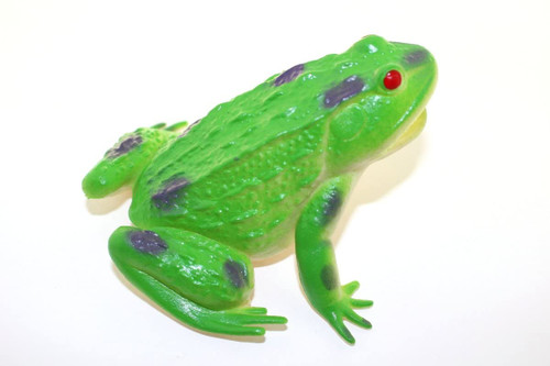 This Green Frog is a great addition to a child's toy collection, a school project, or a decorative piece for an animal lover. You'll love it.!   A frog is any member of a diverse and largely carnivorous group of short-bodied, tailless amphibians composing the order Anura.