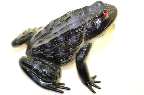 "Black Frog ~ Rubber Replica 3"" X 3""    F6091-B3"