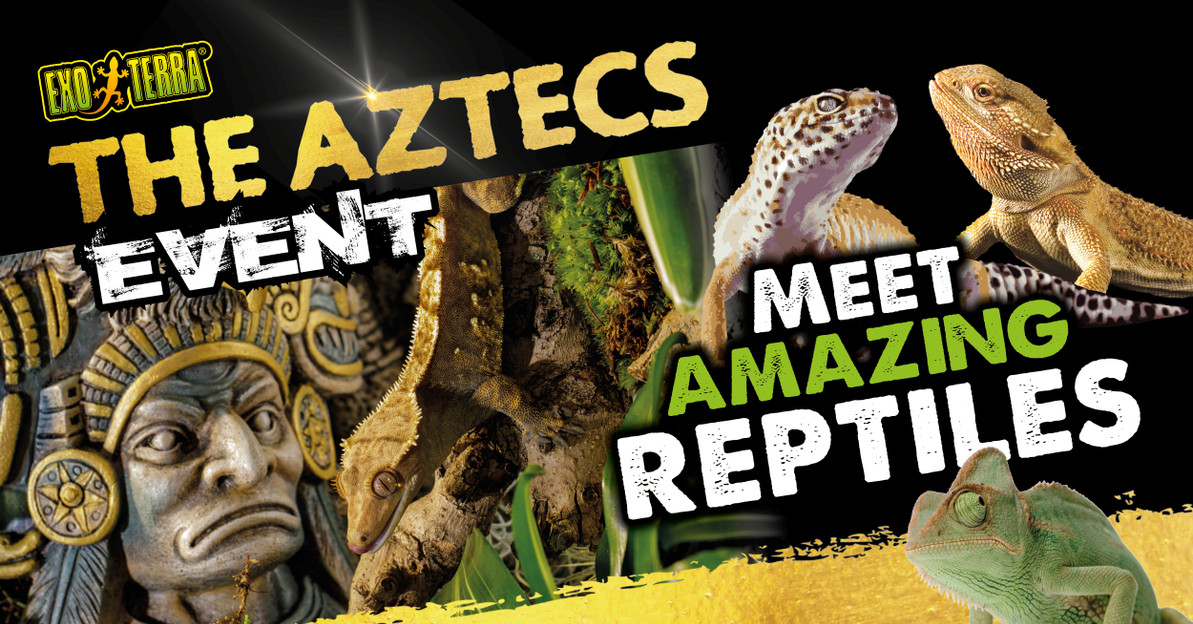 Reptile Supplies | Live Food | Next Day Delivery | Internet