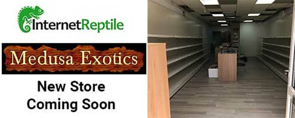 Internet Reptile partners with Local Store Medusa Exotics - New Reptile Shop coming soon.