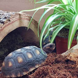 Tortoise & Turtle Products