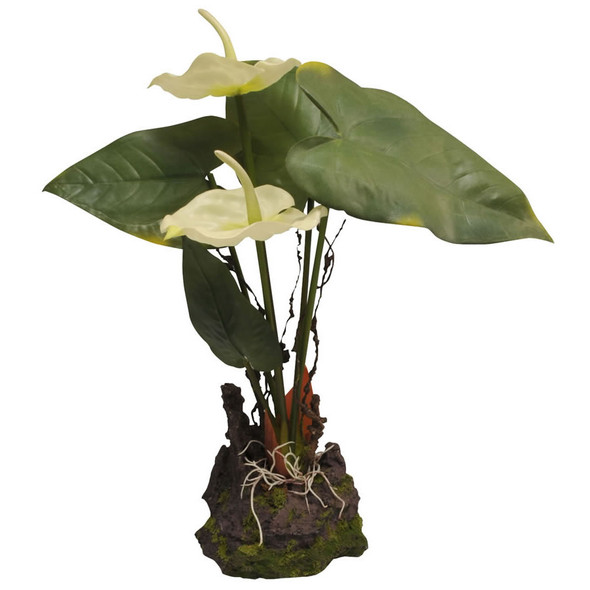Lucky Reptile Anthurium White 30cm, IF-31