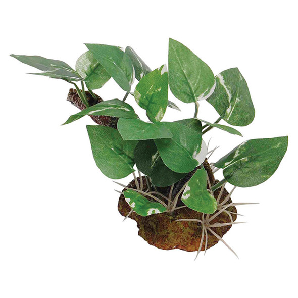 Plant with Rock Base FP81037