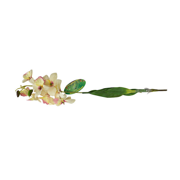Lucky Reptile Orchid with Stem White IF-06