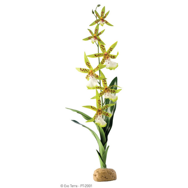 Exo Terra Artificial Spider Orchid Plant