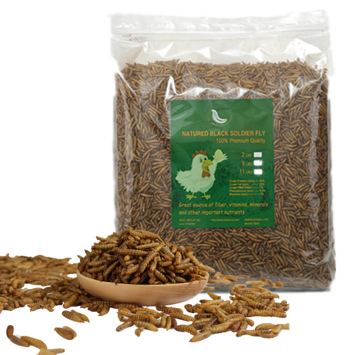 Black Soldier Fly Larvae Superior to Dried Mealworms for Chickens - Non-GMO - Treats for Birds Chickens Hedgehog Hamster Fish Reptile Turtles