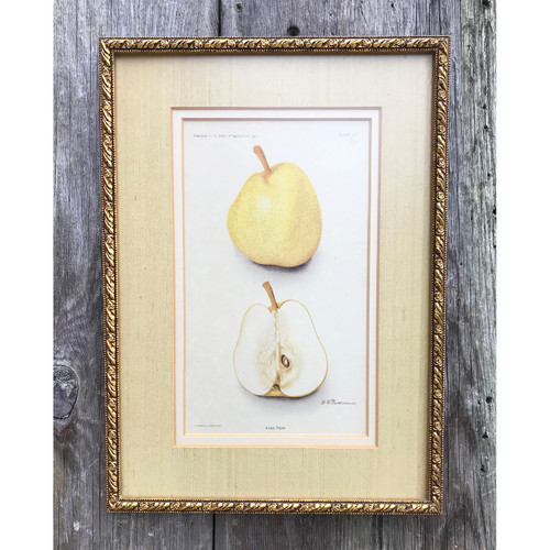 A21006 - Framed Antique Botanical Plate