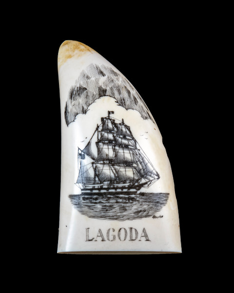 "This beautiful replica Large Sperm Whale Tooth with a scrimshaw etching of the Whaling Ship, the Lagoda.  It is a part of the collection at the New Bedford Whaling Museum.  The title of this tooth is called ""Lagoda"".  The design is of the famous whaling ship, the Lagoda. The original was etched over 100 years ago.  The reproduced tooth is currently made in our office in Fall River, MA."
