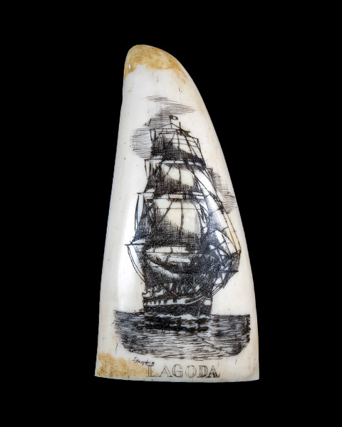 "This beautiful replica Small Sperm Whale Tooth with a scrimshaw etching of the Whaling Ship, the Lagoda.  It is a part of the collection at the New Bedford Whaling Museum.  The title of this tooth is called ""Lagoda"".  The design is of the famous whaling ship, the Lagoda. The original was etched over 100 years ago.  The reproduced tooth is currently made in our office in Fall River, MA.   The replica Sperm Whale Teeth is finished to give it the appearance of an antique tooth.  It also had ridges and edges similar to that of our real tooth.  This beautiful replica Sperm Whale Tooth weighs 1.62 ounces.  The dimensions are 1.53"" x 3.09""x 1.00"".  The item number is SP - 02S.  Front of tooth."