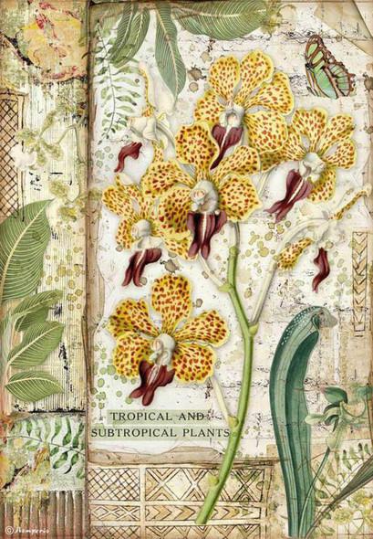 Amazonia Orchid