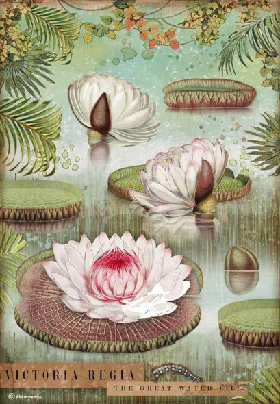 Amazonia Water Lily