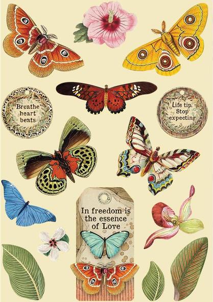 Amazonia Butterfly