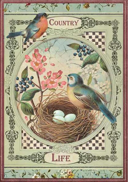 Country Life Birds