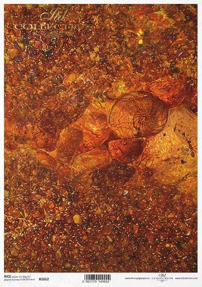 Ammonite & Pebbles
