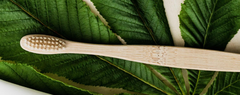 bamboo toothbrush biolon