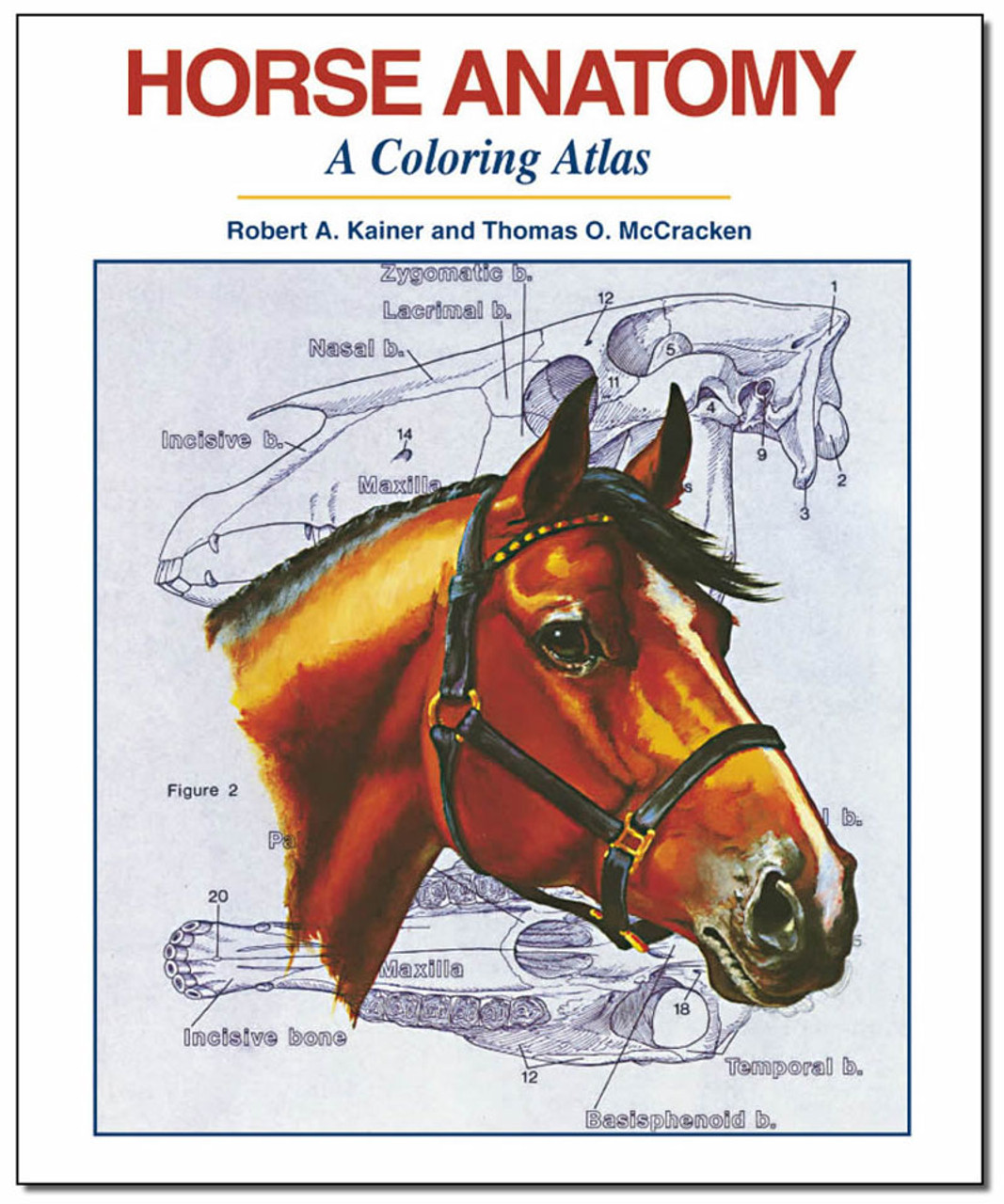 Horse Anatomy A Coloring Atlas Dogwise