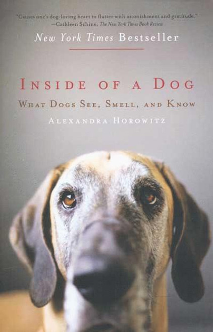 Lost In Translation? How Dogs Use Sight, Sound and Smell to