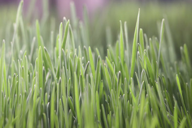 Wow that sure is some pretty grass!!