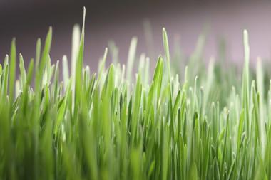 Wheatgrass Shots 500 Shots (500 x .75oz)