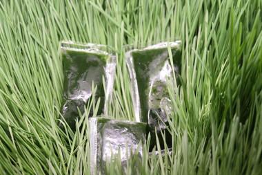 Beautiful shots of wheatgrass darker green than the grass.