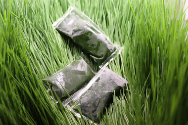 Frozen wheatgrass shots, looks darker green than the grass.  Wow that is some super chlorophyll