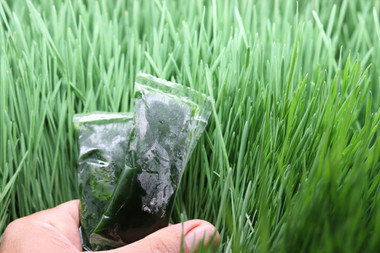 Wheatgrass Shots 90 Shots (90 x .75oz)
