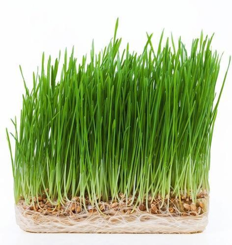 Nutritional Facts Wheatgrass