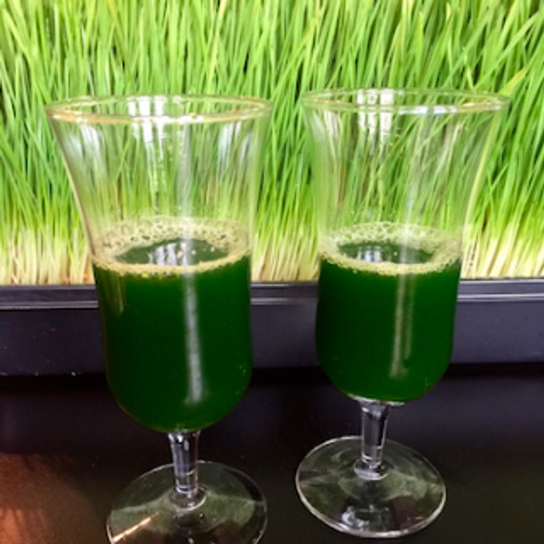 What is Wheatgrass and its Benefits