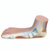 Anatomical Model - Flat Foot (Pes Panus)