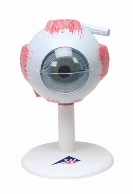 Anatomical Model - eye, 6-part (3x size)