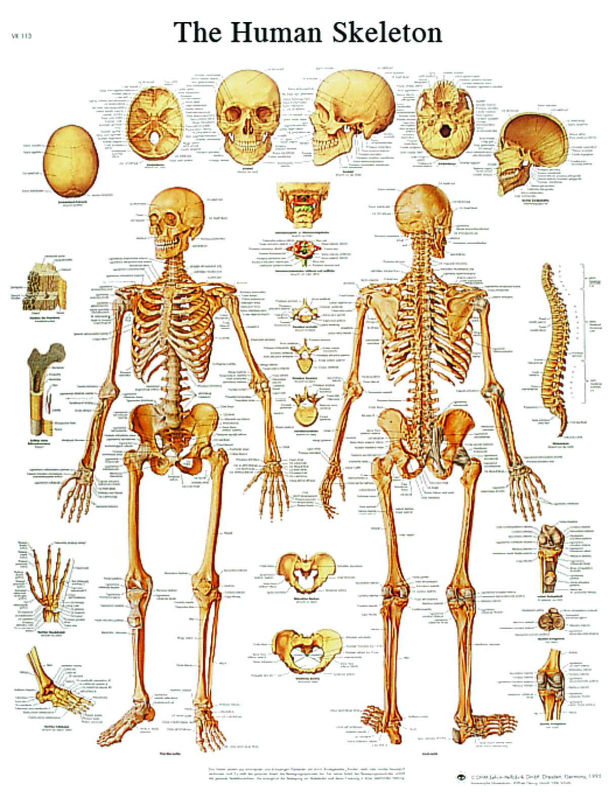 anatomical-charts.jpg