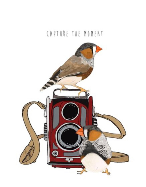 """""""Camera/Birds Capture"""" Hand drawn images have been designed into unique 4.25x5.5'' BLANK INSIDE, note cards. Printed on warm off-white reclcled stock. Includes smooth brown envelope."""