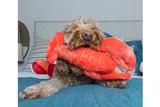 Manny Lobster