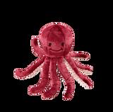 Olympia Octopus