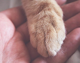 A Unity for Charity in the Pet Industry (Pet Age)