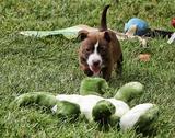 Fluff & Tuff Donates Over 1,200 Toys (Pet Age)