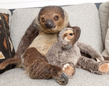 Fluff & Tuff Launches Naming Contest with New Sloth Toy (Pet Age)