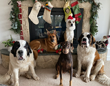 The Official Dogs Of ChatterSource Christmas List (ChatterSource)