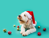 Holiday Retailing in 2020 (Pet Business)