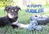 A Puppy Jubilee - eBook