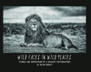 Wild Faces in Wild Places: Stories and Inspirations of a Wildlife Photographer