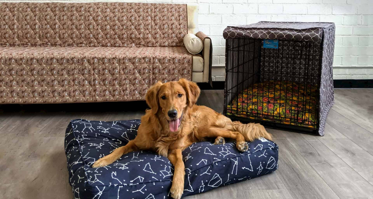 washable dogs beds from molly mutt